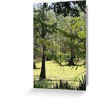 Swamp View Greeting Card