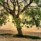 Beach Tree Bathed in Evening Light by kenspics