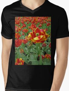 Yellow and Red Tulips photograph Mens V-Neck T-Shirt