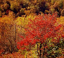Russet Tones in Autumn  ^ by ctheworld