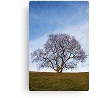 awaiting seasons Canvas Print