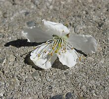 Blossoming Concrete by brynnlm