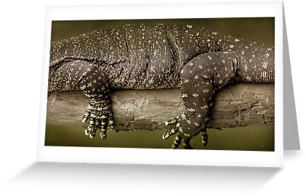 Goanna by Holly Kempe