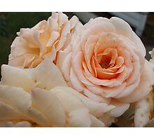 Brandy Roses Photographic Print