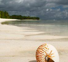 Nautilus - Cocos (Keeling) Islands by Karen Willshaw