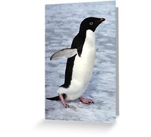 Adelie Penguin Walking on the Fast Ice Greeting Card