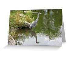 Grey Heron: fisher bird Greeting Card