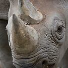 Eastern Black Rhinoceros by Michael Hadfield