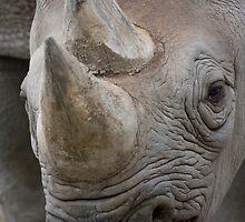 Eastern Black Rhinoceros by Michael Hadfield