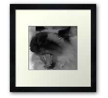 A Cat's Life Framed Print