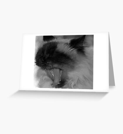 A Cat's Life Greeting Card