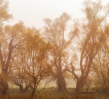 Fog and Willow by Belinda Osgood