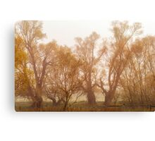Fog and Willow Canvas Print
