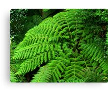 Ferns in Tara Bulga National Park. Canvas Print