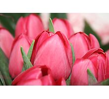 Tulips Photographic Print