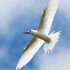 Angel in Flight - Cocos (Keeling) Islands by Karen Willshaw