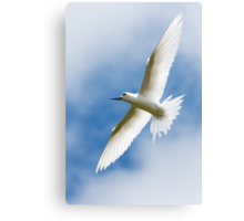 Angel in Flight - Cocos (Keeling) Islands Canvas Print