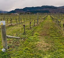 Vineyard 3 by fotoWerner
