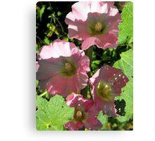 Pink Holly Hocks Canvas Print