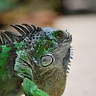 Iggy The Iguana by Nick Carter