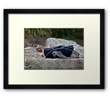 Safe Sunbathing Framed Print