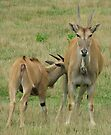 Eland Mom and Baby by Ginny York
