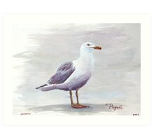 California Gull Acrylic on Paper Art Print