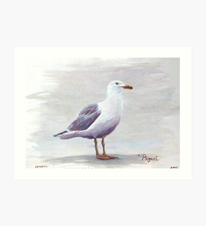 California Gull Acrylic on Paper Art Print