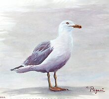California Gull Acrylic on Paper by Pagani