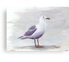 California Gull Acrylic on Paper Canvas Print