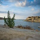The Plant overlooking the Harbour by Jakov Cordina