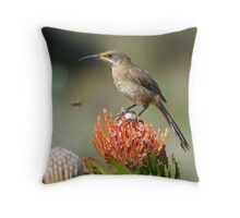 Buzzed!! Throw Pillow