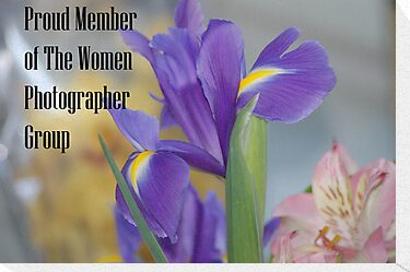 BANNER for Women Photographer group by loiteke