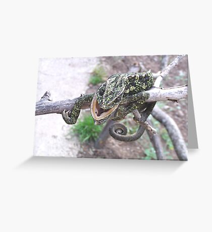 Colourful Chameleon Wrapped Around A Branch Greeting Card