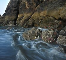 Littoral Zone  by Randall Scholten
