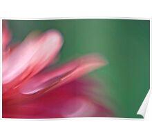 Gerbera petals Poster