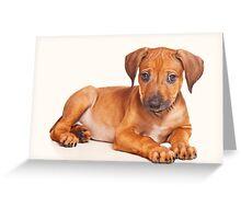 Funny red Ridgeback puppy Greeting Card