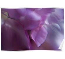 Wild flower petals Poster