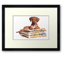 Funny red Ridgeback puppy Framed Print