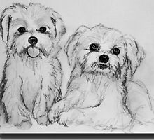 Maltese pups by Linda Costello Hinchey