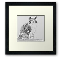 Stumpy the cat Framed Print