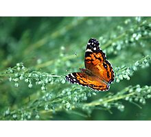 A simple beauty Photographic Print