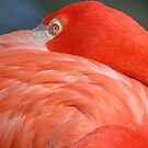 the flamingo by dc witmer