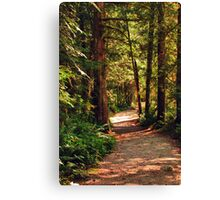 A Walk through the Woods Canvas Print