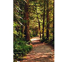 A Walk through the Woods Photographic Print