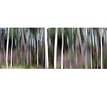 Tree Spirits Photographic Print
