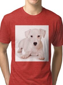 white Jack Russell Terrier puppy Tri-blend T-Shirt