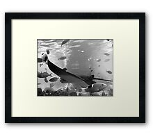 rays in black and white Framed Print