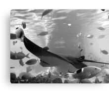 rays in black and white Canvas Print