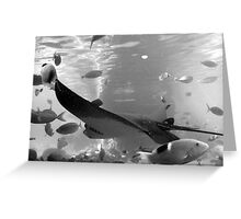 rays in black and white Greeting Card